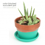 color blocked succulent pot