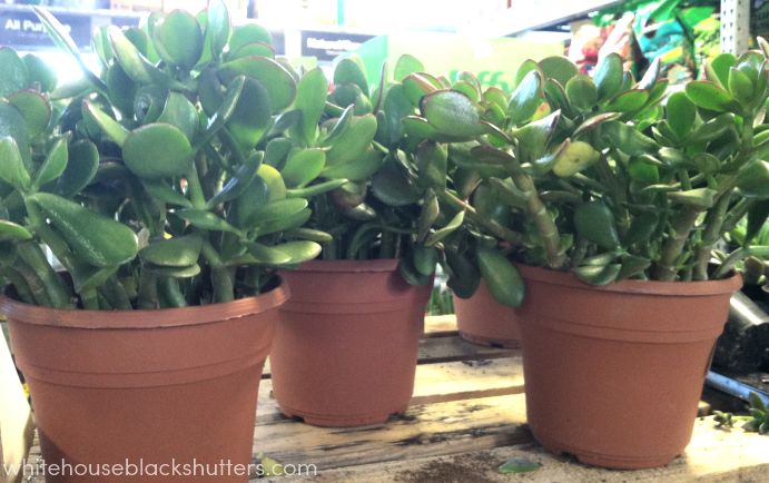 How to make a succulent garden the right way, with helpful tips!